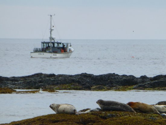 harbor seals and a lobster boat off kennebunkport me picture of rh tripadvisor com