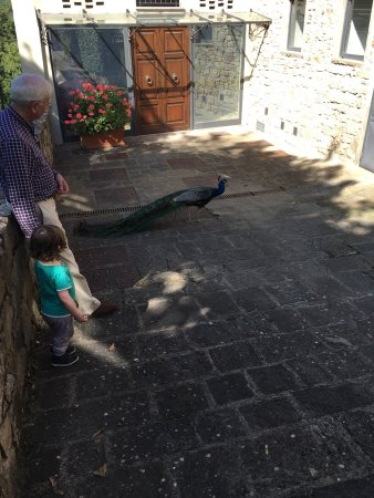 Castello di Querceto: photo1.jpg