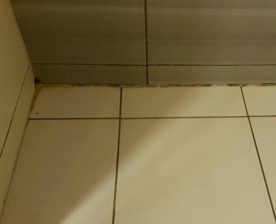 Apartamenty Zakrzowek: Pod prysznicem fugi bardzo usyfione chyba nigdy nie myte