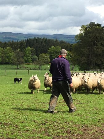 Strathearn Fleece & Fibre