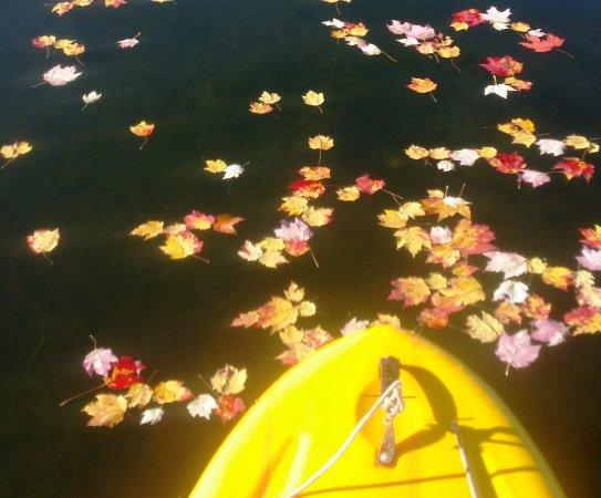 Saint Germain, WI: Gliding across the fall leaf-strewn lake