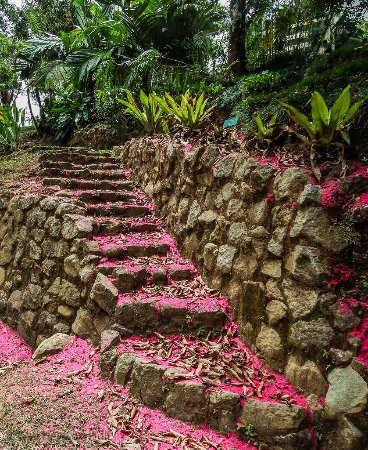 "San Vito, Costa Rica: Steps at WBG covered with petals from ""Manzana de agua"", Malay apple"