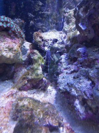 Florida Keys Eco-Discovery Center: 20160615_115359_large.jpg