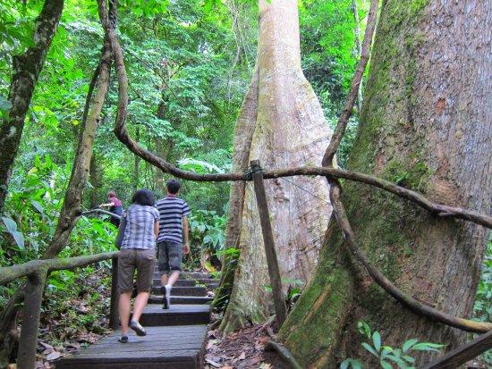 Piyamit Tunnel, Betong, Thailand: the entrance - Picture of Piyamit ...