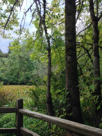 Tualatin Hills Nature Park: Small wetlands area at Tualatin Valley Nature Park