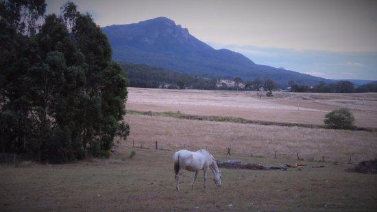 Barney View, Australia: Mt Maroon early morning