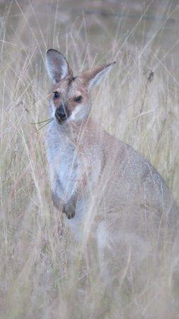 Barney View, Australien: Neighbour