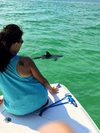 We got to see dolphins in the beautiful emerald green for Gulf angler fishing charters