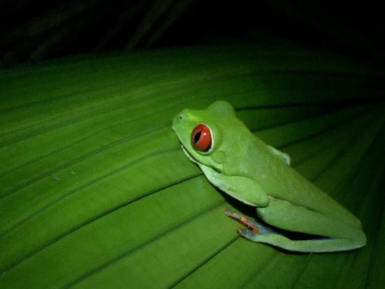 Selva Verde Lodge: photo0.jpg