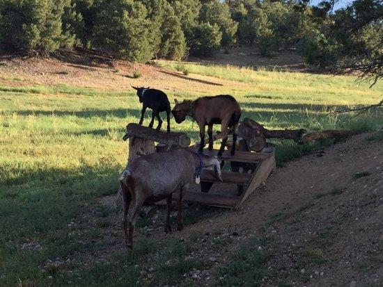 Mountain Goat Lodge: photo8.jpg