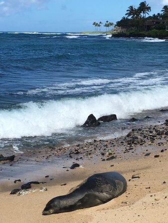 Lawai Beach: photo1.jpg