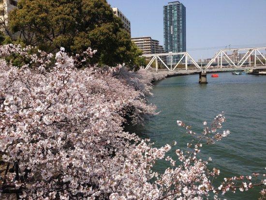 Kemasakuranomiya Park