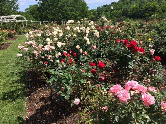 Lauritzen Gardens Omahau0027s Botanical Center: Rose Garden
