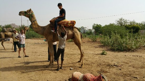 Chandawat Camel Safari