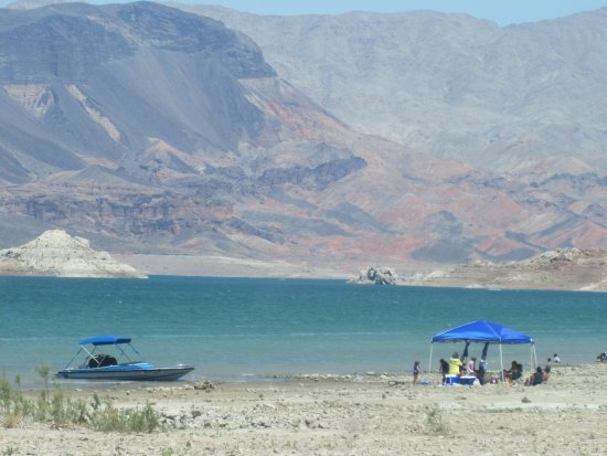one happy dog Picture of Boulder Beach Campground Lake Mead