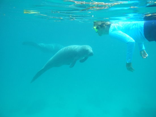 Hicaco Tours Snorkel & Dive : awesome experience