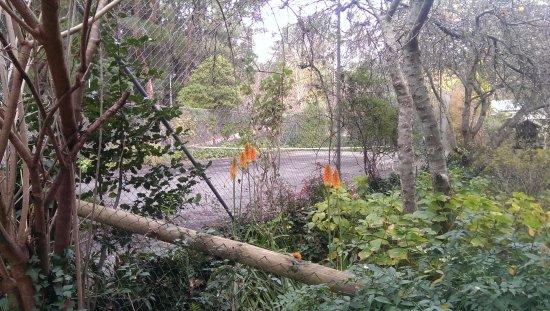 Aldgate, Austrália: Garden across tennis court