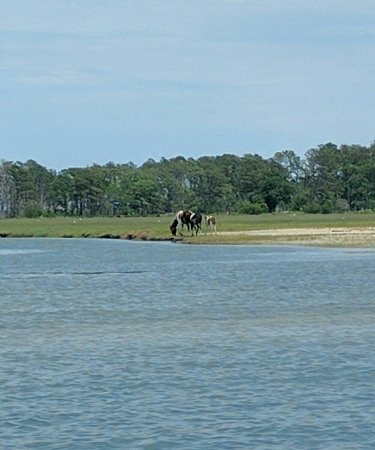 Barnacle Bill's Wild Pony Boat Tours