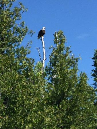 Ely, MN: Bear Head Lake State Park