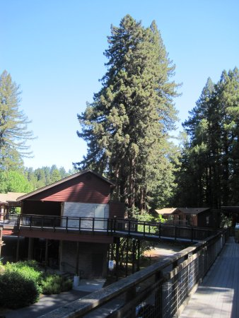 Creekside Inn & Resort Foto