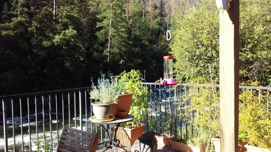 Yosemite Blue Butterfly Inn Picture
