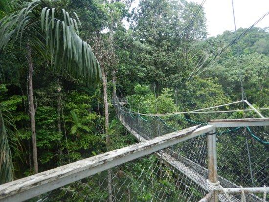 Iwokrama Canopy Walkway de bruggen & de bruggen - Picture of Iwokrama Canopy Walkway Iwokrama Forest ...