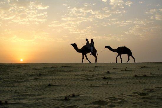 Wanderlust Camel Safari