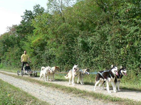 Maine et Loire, فرنسا: Baptême doggy-kart