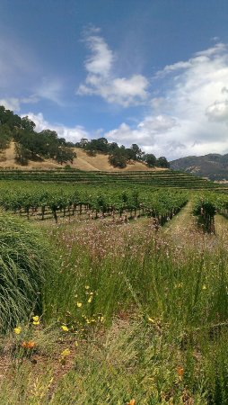 Nelson Family Vineyards: IMAG1735_large.jpg