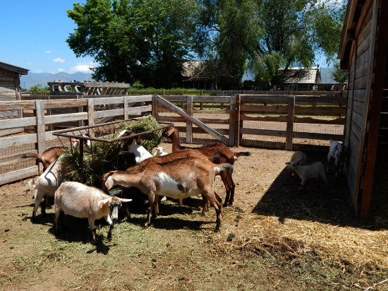Wellsville, UT: Lots of Farm Animals