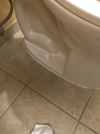 Delmar, MD: Toilet cleniness in the bathroom (what you see)