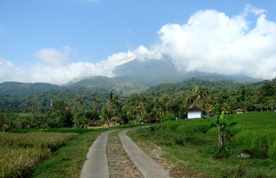 Ngawi, Ινδονησία: Persawahan desa wisata hargomulyo
