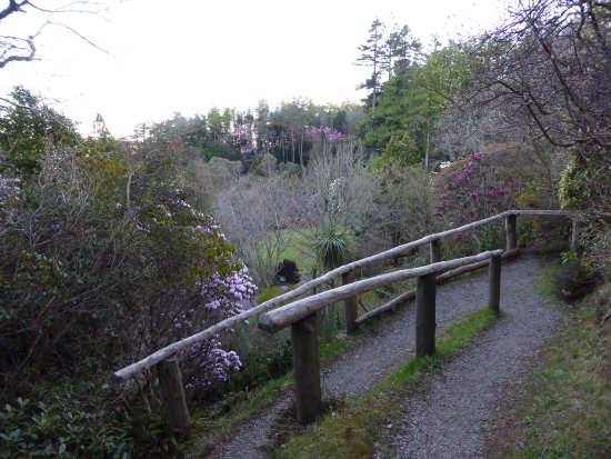 Arduaine, UK: A view over the treetops
