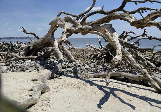 Driftwood Beach On Jekyll Island Ga