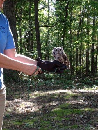 West Virginia Botanic Garden: Screech Owl