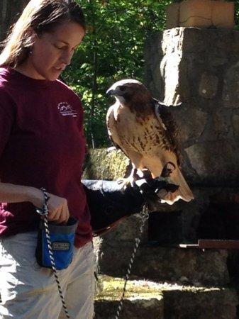 West Virginia Botanic Garden: Bird Show
