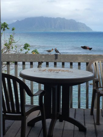 The Lodge at Keneohe Bay: Our morning company.
