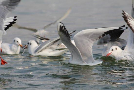 Foto de Nal Sarovar Birds Sanctuary