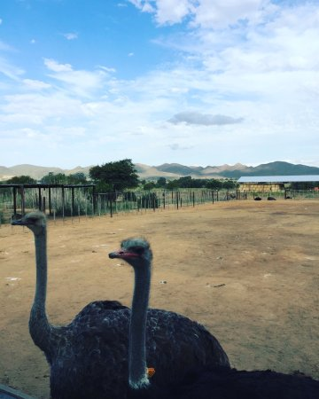 Safari Ostrich Show Farm: photo1.jpg