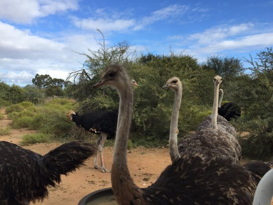 Safari Ostrich Show Farm: photo3.jpg