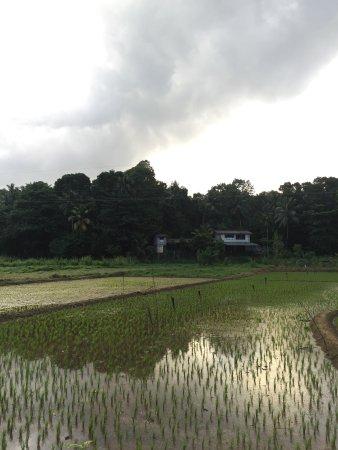 Mawanella, Sri Lanka: photo4.jpg