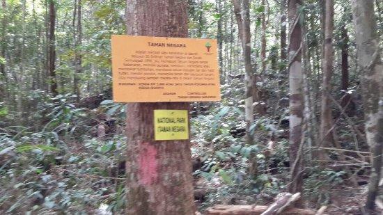 Mount Santubong: IMG-20160612-WA0016_large.jpg