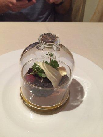 All Spice : chocolate terrarium