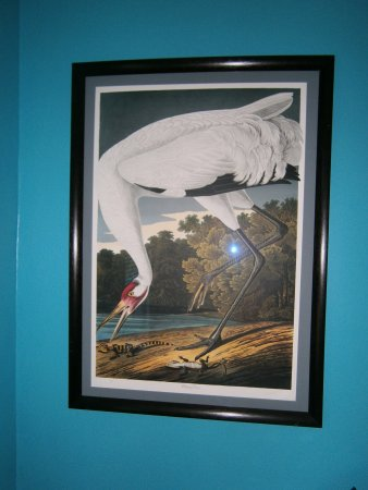 Bishop Hill, อิลลินอยส์: A picture from the Audubon prints of a Whooping Crane