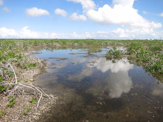 Sarteneja, Belice: mangrove savanna at the end of the lagoon