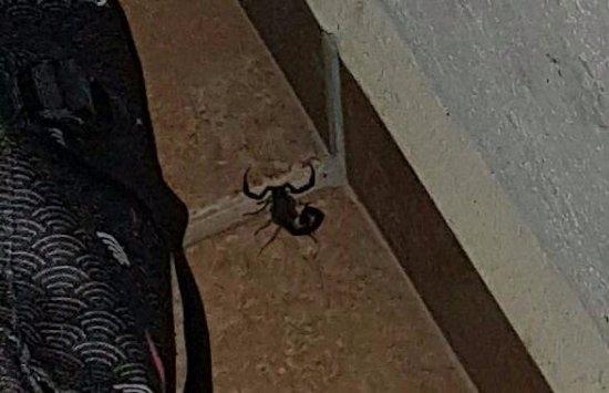 Villas Ecotucan: un magnifique scorpion bien vivant auprès de ma valise