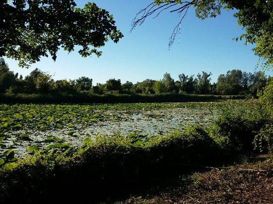 Il Parco del Loto