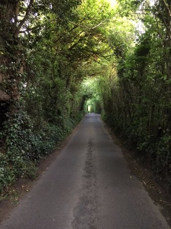 Dundry, UK: Walking back from the pub, a challenging country road