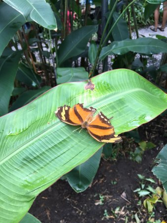 Butterfly Haven: photo0.jpg