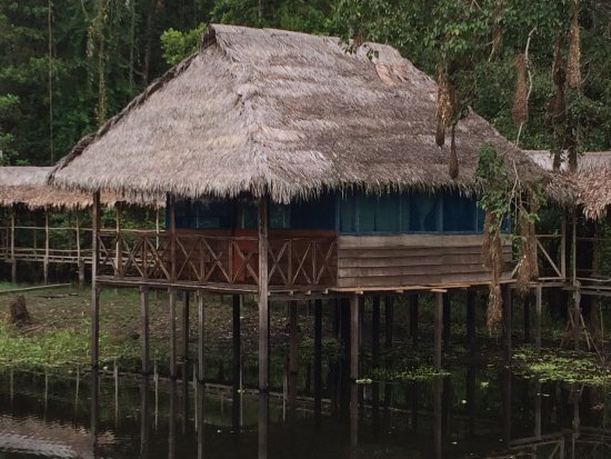 Amazon Refuge : Our fantastic private room
